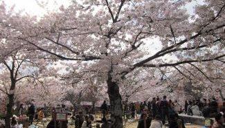 טיול מאורגן ליפן טוקיו