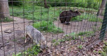שמורת הדובים - טיול לרומניה עם החברים