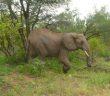 דרום אפריקה - שמורת קרוגר